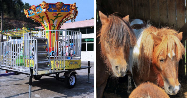 7-YEAR OLD GIRL BUYS A DOZEN PONIES AND A MERRY-GO-ROUND AFTER BORROWING HER DAD'S CREDIT CARD