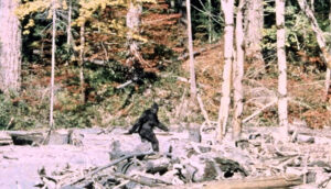 Area Bigfoot enthusiasts hunt for proof