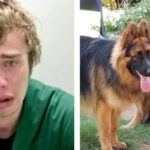 BURGLAR SUES HOMEOWNER AFTER BEING RAPED BY GERMAN SHEPHERDS WHILE STUCK IN HOUSE'S PET DOOR