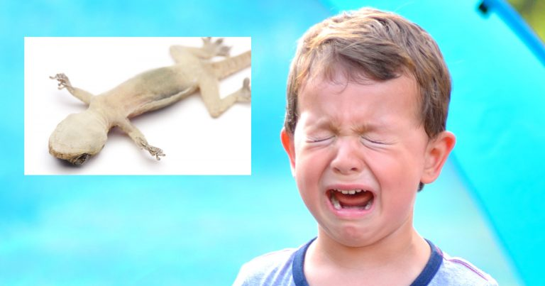 'Out, Out, Brief Candle!': This Little Boy Whose Pet Gecko Passed Away Is Wailing About Losing His Only Heir